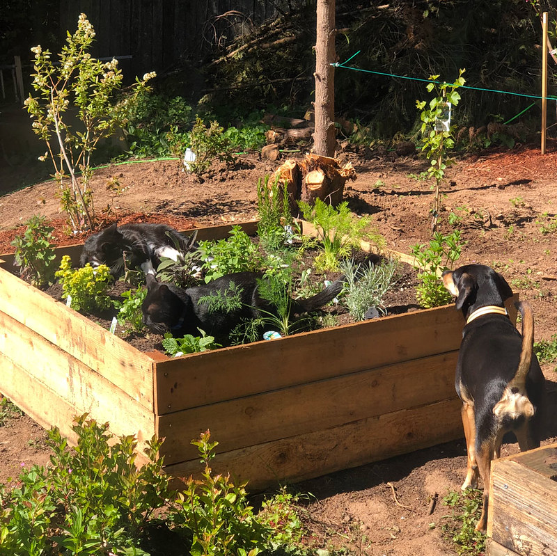 Square-Foot Gardening (Animals)